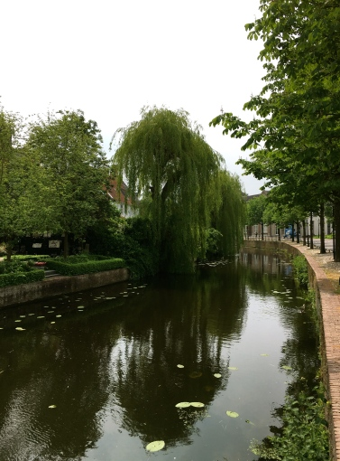 Treurwilg. {Weeping Willow}