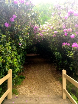 The Covered Path.